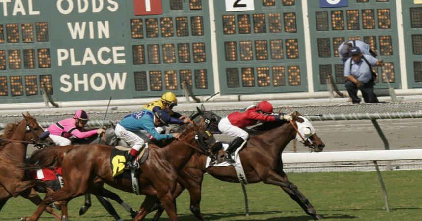 horse odds board